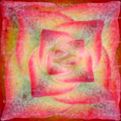 Succulent - Crassula