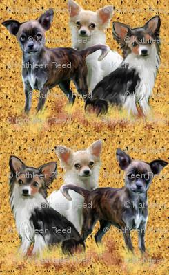 Chihuahua_grouping