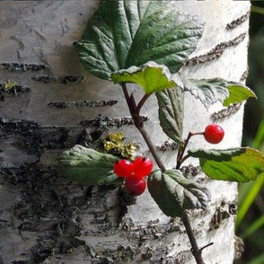 Birch_n_Berries_crop Set