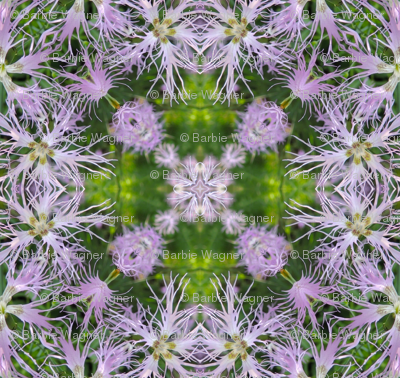 purple_dragon_tongue_2_crop-1_k1