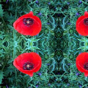 Vibrant  Poppy
