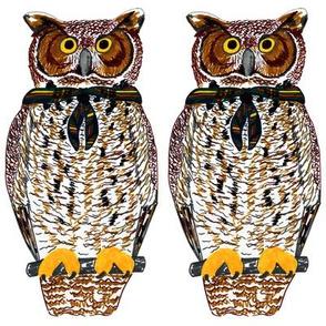 owl swatch