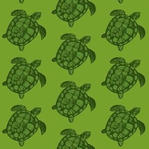 Green Loggerhead Sea Turtle