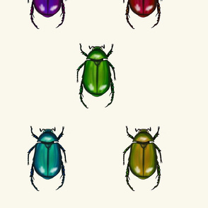 Tropical Beetles