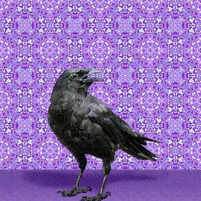 Black Crow Purple Kaleidoscope Pattern