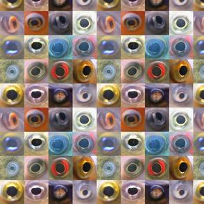 Fish Eyes II