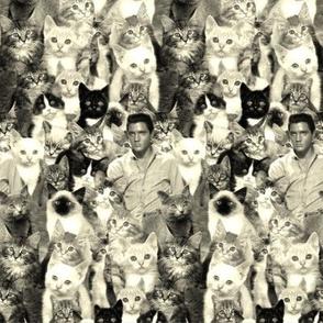 Elvis and The Kitties