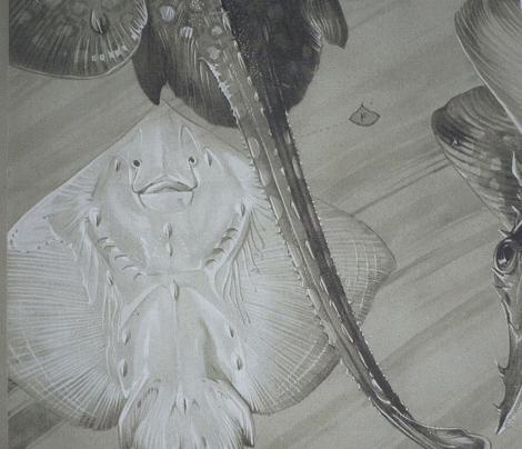Maheut ray