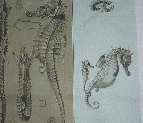 Maheut seahorse