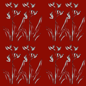 Double Kangaroo Paw Red - Large
