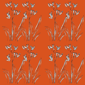 Double Kangaroo Paw Orange - Large
