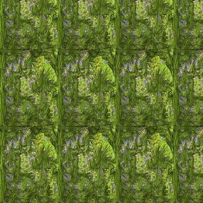 Fairy Moss