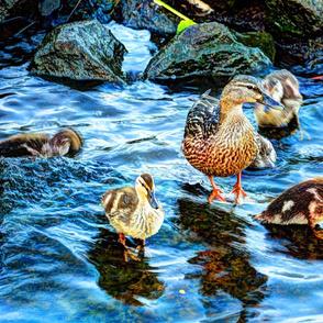ducks_fused