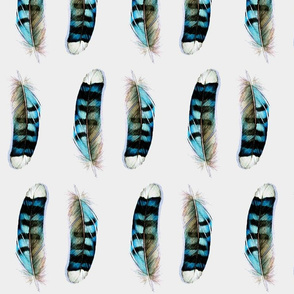 Blue Jay - Feathers Collection