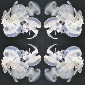 jellyfish cluster