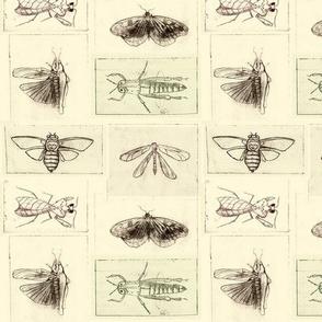 Entomology studies
