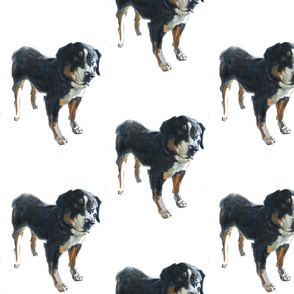dog_2_gimp