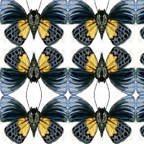 Butterfly-flutter by II