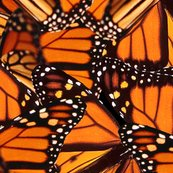 Rrrrbutterflyprint_shop_thumb