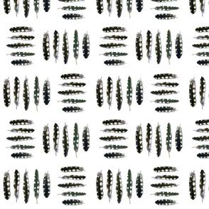 Woodpecker Feathers