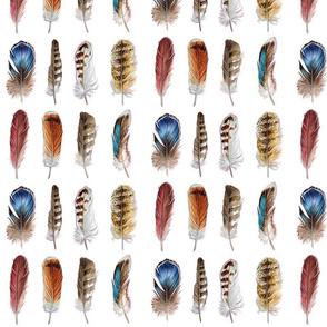 Bird Feathers (White Background)
