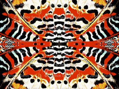 Burtterfly wings