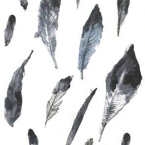 Collared Inca Hummingbird Feathers