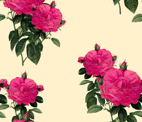 Redoute' Rose ~ Hot Pink and Trianon Cream ~ Jenny's Big Day fabric by peacoquettedesigns on Spoonflower - custom fabric