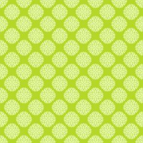 Chartreuse Chrysanthemums