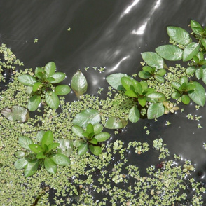 plants on the water