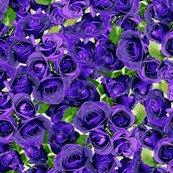 Rrrrabundant_roses_-_purple_11-10-13_shop_thumb