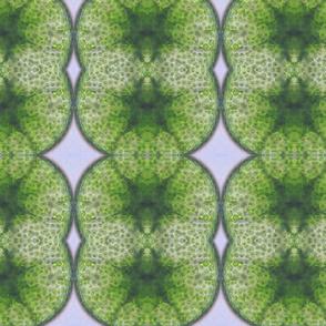 algae12