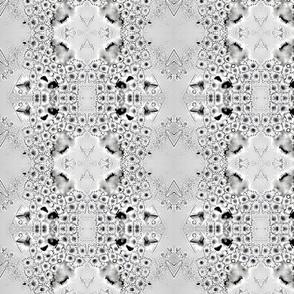 diatom11b