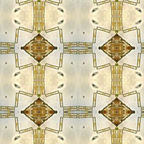 diatom33