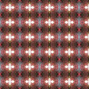 Red bougainvillea, small