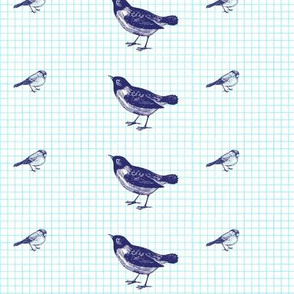 birds on a grid