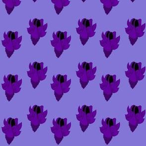 bellflower - purple