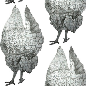 CHICKEN_for_repeat3_