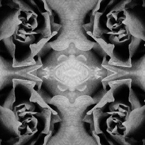 The ghostly rose