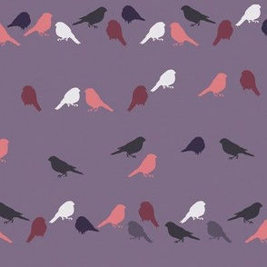 Bullfinch Cotton Knit