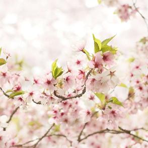 Pretty Pink Blossom