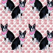 Rrrrrboston_terrier_pink_background_shop_thumb