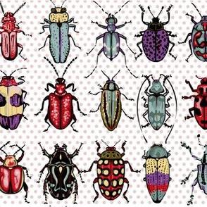 Beetles - natural colors