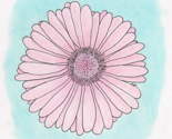 Flower_pink_thumb