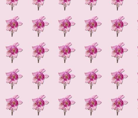 Pink Columbines fabric by koalalady on Spoonflower - custom fabric