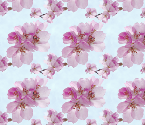 Pink Blossom 1 fabric by koalalady on Spoonflower - custom fabric