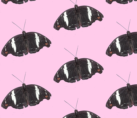Butterfly on pink background fabric by koalalady on Spoonflower - custom fabric