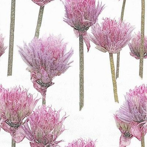 Pink Chives