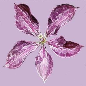 Clematis  pink