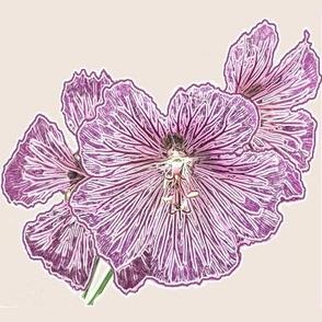 Geranium pink_